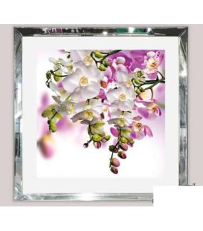 Obraz szklany Storczyki
